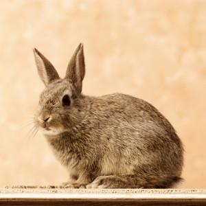L'animalerie : le lapin