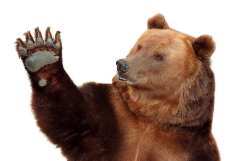 Vidéo : se gratter le dos version ours !
