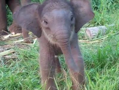 Un bébé éléphant apprend à utiliser sa trompe