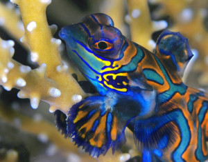En plongée aux îles Fidji