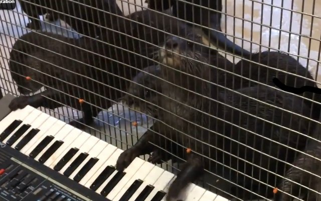 Des animaux musiciens
