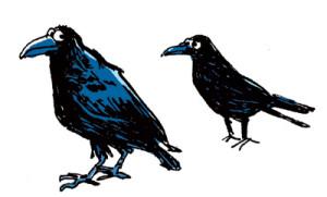 Corbeau ou corneille ?