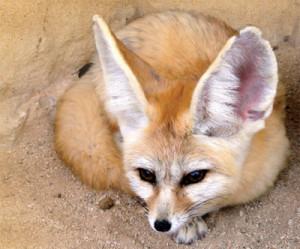 Les fabuleux animaux du désert