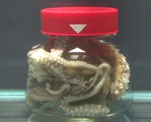 Le secret de la pieuvre !