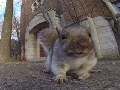 Des animaux voleurs de caméras !
