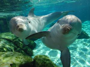 Le dauphin et l'acrobate