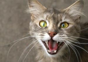 Parles-tu « chat » ?