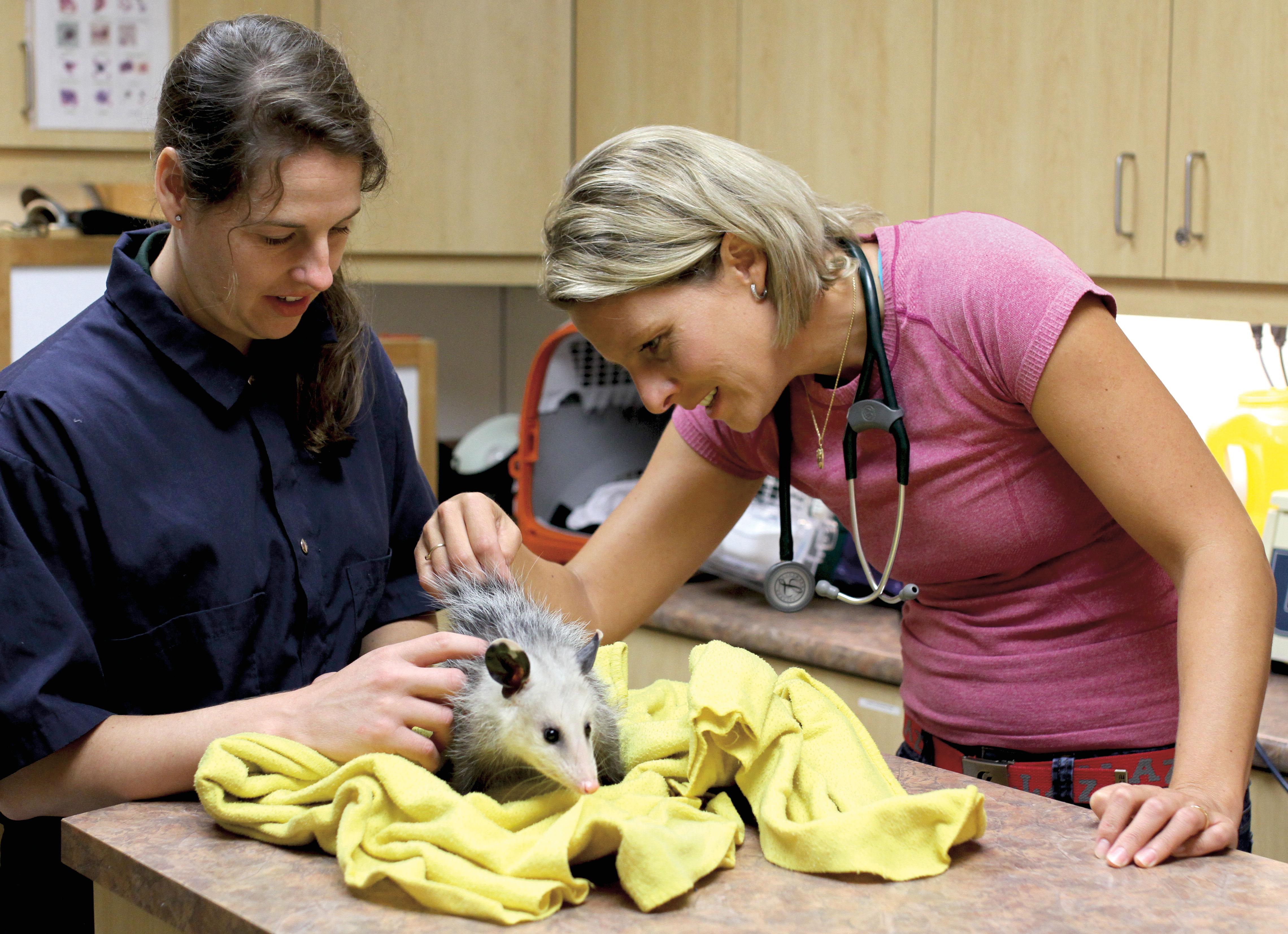 Vétérinaire au zoo : erratum