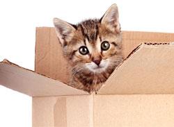 Des chatons s'amusent dans une boîte