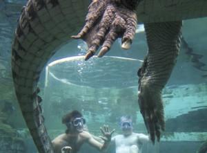 Nager avec les crocodiles !