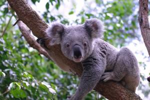 La galerie des animaux australiens