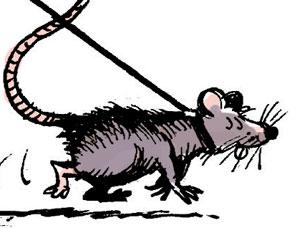 Rats géants préhistoriques