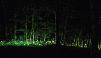Foresta lumina, la forêt magique