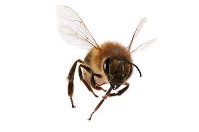 Des abeilles filmées au ralenti