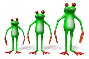 Petite ou grande grenouille ?