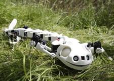 Pleurobot, le robot salamandre