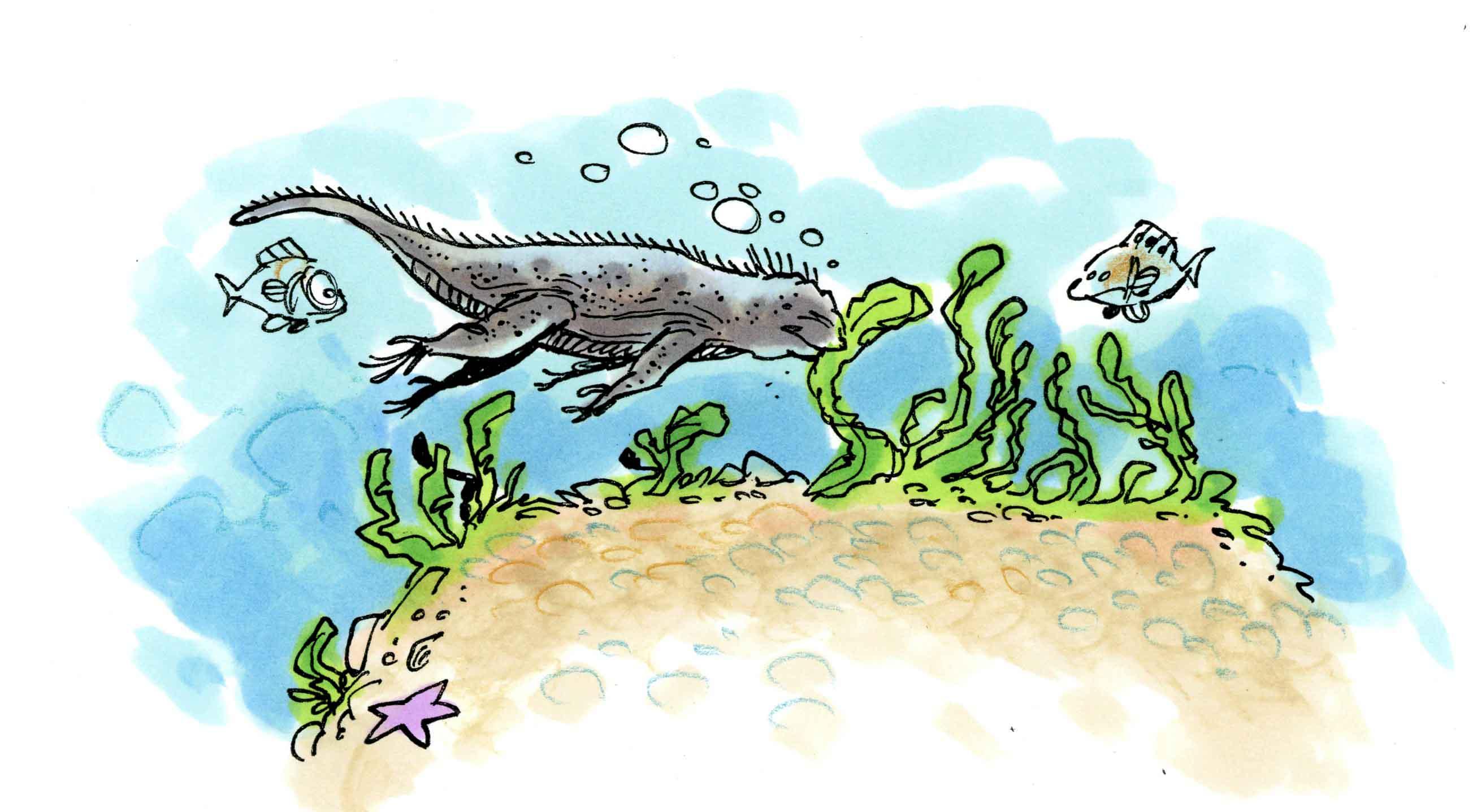 En plongée avec un iguane marin !