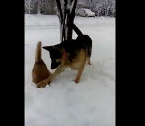 Explo vidéo : Des animaux farceurs