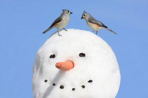Que font les oiseaux en hiver ?
