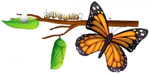 Les papillons ont-ils une famille ?
