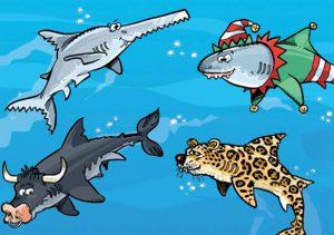 Qui suis-je?  Spécial requins