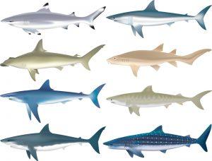 Quiz : Les requins