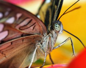 Parlons papillons !