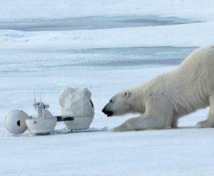 Un ours s'amuse avec une caméra