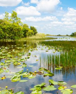 À quoi servent les milieux humides ?