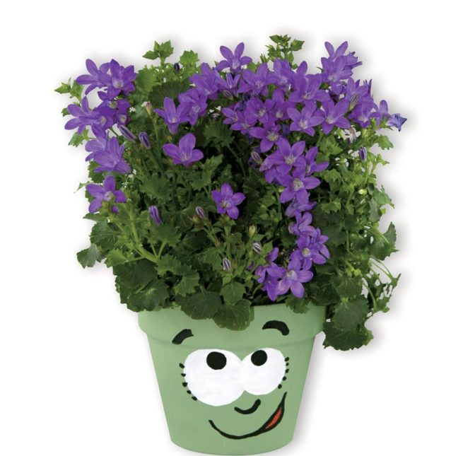 Pot de plante décoré