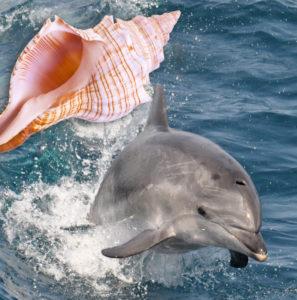 En vidéo : Un dauphin pêche avec un coquillage