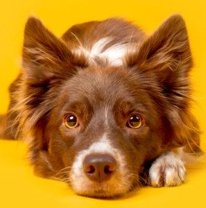 Le chien : du flair et bien plus !