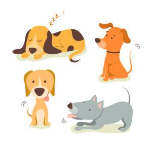 Quiz : Amis des chiens