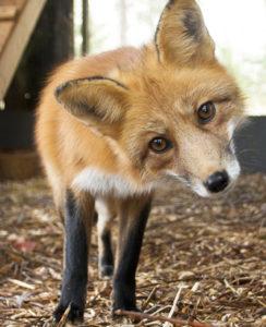 Un refuge pour les animaux des forêts