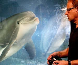 Un robot dauphin plus vrai que nature!