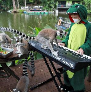 Au zoo, la musique c'est magique!