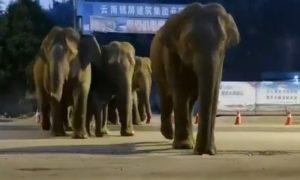 Un troupeau d'éléphants en cavale
