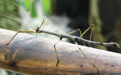 Vidéo : L'insecte invisible !