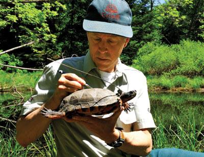 La tortue des bois
