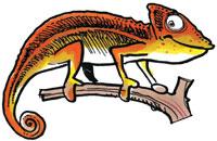 Le mot mystère des reptiles
