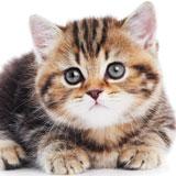 Le chaton, un ami à apprivoiser