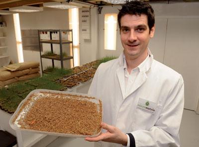 Insectes comestibles à vendre
