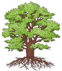 arbres avec racines