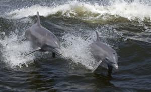 Les dauphins s'appellent-ils par leurs noms ?