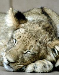 Combien de temps dorment les animaux?